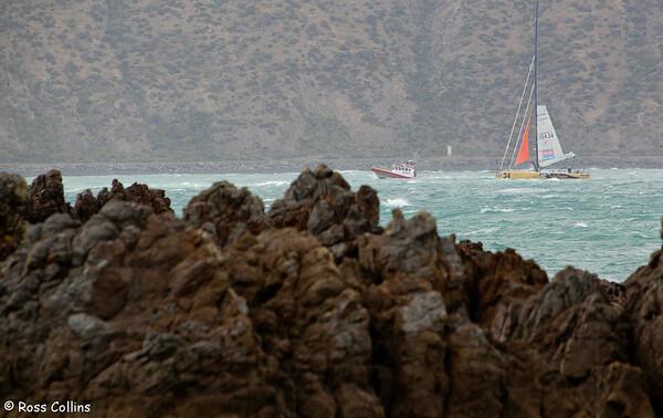 Velux 5 Oceans Round the World Single-Handed, Wellington, 16 January 2011