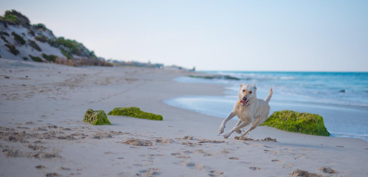 Quinns Dog beach WA Australia