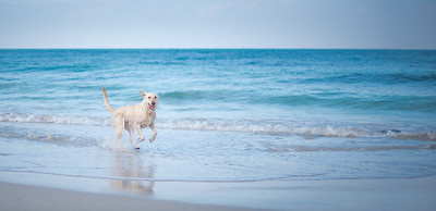 Quinns Dog beach WA Australia