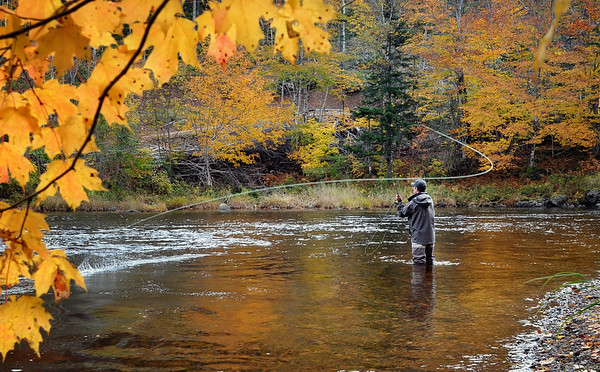 Fly fisherman spey casting on the Margaree River, Cape Breton, Nova Scotia