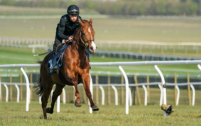 Guineas Breeze Up Practice Day-15