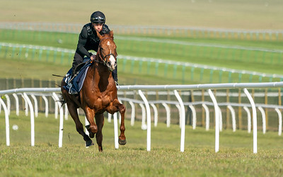 Guineas Breeze Up Practice Day-11