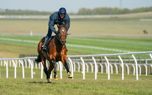Guineas Breeze Up Practice Day-7