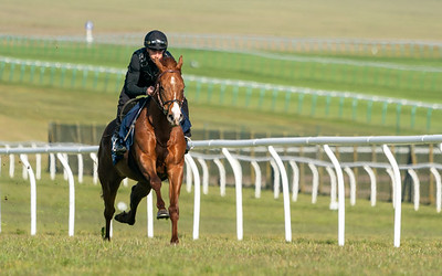 Guineas Breeze Up Practice Day-10