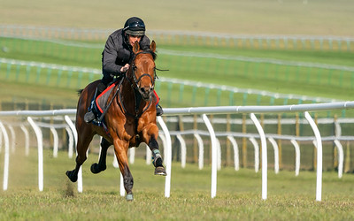 Guineas Breeze Up Practice Day-20