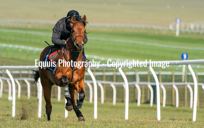 Guineas Breeze Up Practice Day-21