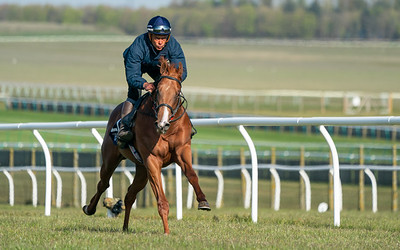 Guineas Breeze Up Practice Day-1