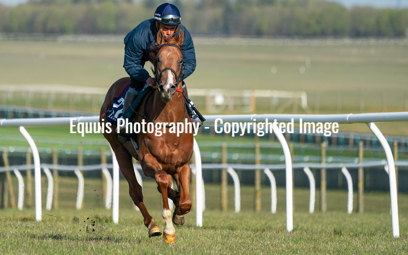 Guineas Breeze Up Practice Day-2