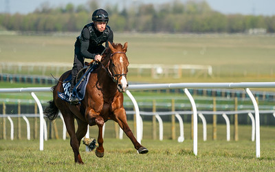 Guineas Breeze Up Practice Day-17