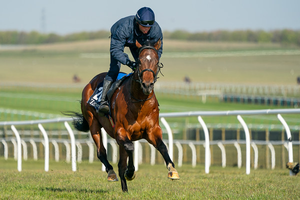 Guineas Breeze Up Practice Day-8