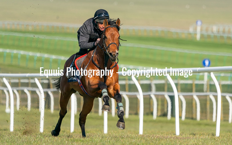 Guineas Breeze Up Practice Day-22