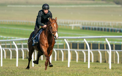 Guineas Breeze Up Practice Day-14