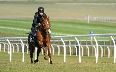 Guineas Breeze Up Practice Day-12