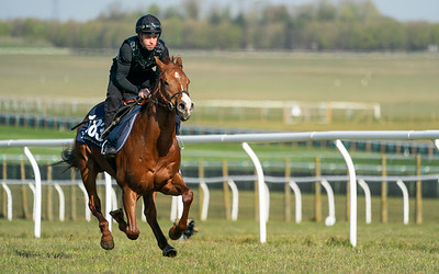 Guineas Breeze Up Practice Day-16