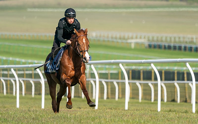 Guineas Breeze Up Practice Day-13