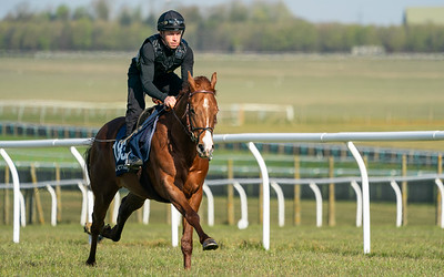 Guineas Breeze Up Practice Day-18