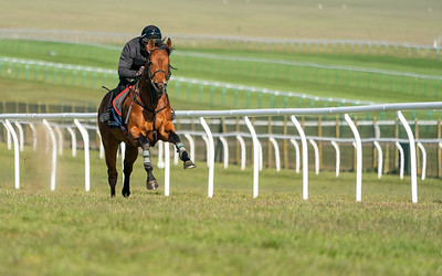 Guineas Breeze Up Practice Day-19