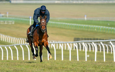 Guineas Breeze Up Practice Day-5