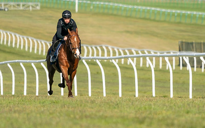 Guineas Breeze Up Practice Day-9