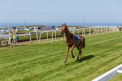 The Jersey Guineas – Sunday 14th May