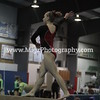 Event Photos Action WNY (14)