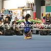 Gymnastics Photographer on Site (22)