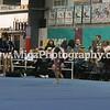 Gymnastic Photographer Buffalo NY (18)
