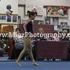 Gymnastcis Event Print on site (18)