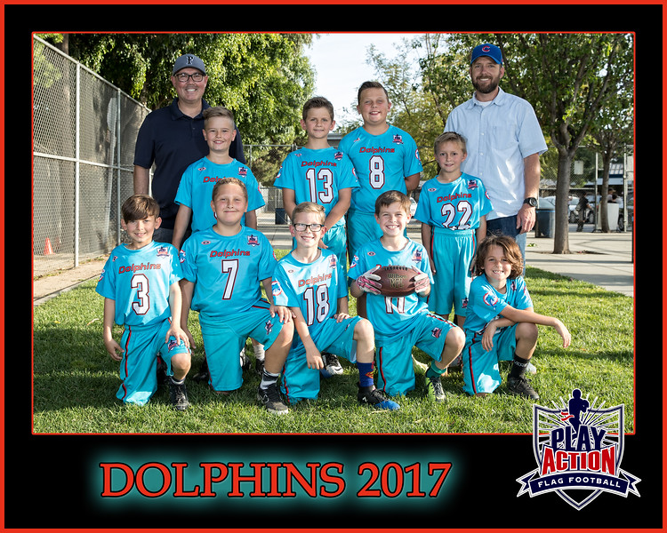 dolphins 3 8X10