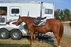 Brigitte Horse Competition_2016_0847