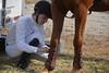 Brigitte Horse Competition_2016_0856