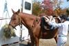 Brigitte Horse Competition_2016_0843