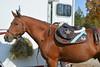 Brigitte Horse Competition_2016_0845