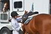 Brigitte Horse Competition_2016_0848