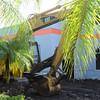Date:  8/16/11<br /> Location:  Sarasota, FL