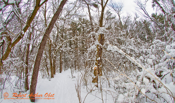 Cross country skier's winter view of fresh snow over hardwood forests within the University of Wisconsin Madison Arboretum (USA WI Madison; Obst FAV 2013 Sports Fun Extraordinaire Action Outdoors Nikon D800 Image 7877)