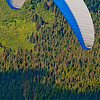 Hiker's view from the North Face Trail of colorful paraglider or parasailer over the forested slopes of Mount Alyeska near the Alyeska Resot (USA Alaska Girdwood)