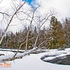 Cross country skiers winter view of a lonely paper birch tree or Betula papyrifera over the ice and snow covered Cedar Rapids on Section 2 of the wild Wolf River (USA WI White Lake Langlade; Obst FAV Photos 2013 Nikon D300s Sports Fun Extraordinaire Image 4933)