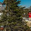 SFE-AO_7183_ATO.WestUSACanada2014-USA.MT.GlacierNP.LoganPassArea.HiddenLakeNatureTrail.HikersYieldToMountainGoats-B (DSC_7183.NEF)