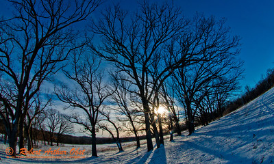 Cross country skiers view of evening sun under clear skies over majestic oaks or Quercus within Owen Conservation Park (USA WI Madison; Obst FAV Photos 2013 Nikon D800 Image 7402)