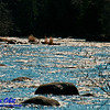 Bow canoeists's view of Sherry Rapids sparkling in the mid day sun on Section 2 of the wild Wolf River  (USA WI White Lake Langlade; RAO 2012 Nikon D300s Image 4317)