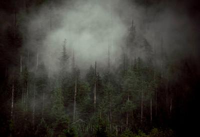 Nature / Environment