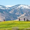 6NV STATE Girls Golf at Eagle Valley West GC ©2016MelissaFaithKnight&FaithPhotographyNV_0028