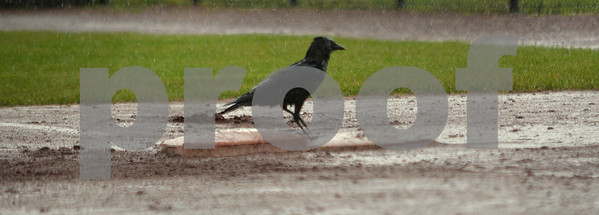 Photo by Albert J. Marro  An American crow runs the basees bakwards during a rain delay at Saturday's washed-out twin bill of the North - South Softball Classic held at Castleton University. The annual all star games are hosted by the Vermont Softball Coaches Association. This year the weather won since the games were called in the bottom of the second inning as the South was coming to bat.