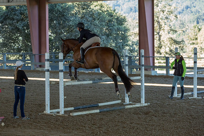 Horse Jumping Woodside