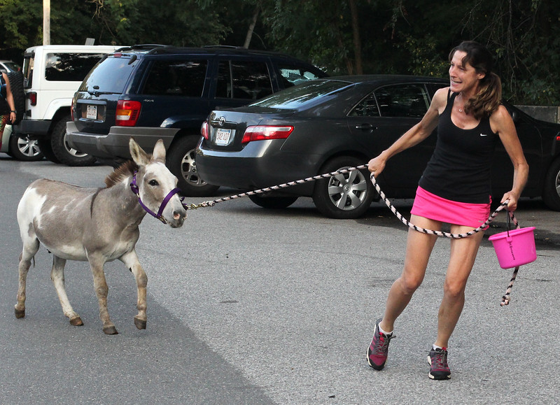 Lynn, Ma. 8-16-17. Janine Jacques and Harry take up the rear of the short race at Lynn Woods. Harry is a rescue donkey running to promote a 3 mile road race on September 9th at Myopia Polo Field in Hamilton to raise money to held save the donkeys from being processed in China.