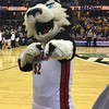Women's title game, Northern Illinois mascot Husky