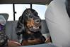 My copilot Bella....chillin!!
