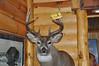 Hasslen's Buck!!