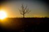 Sunset, Kennedy Koch photo credit